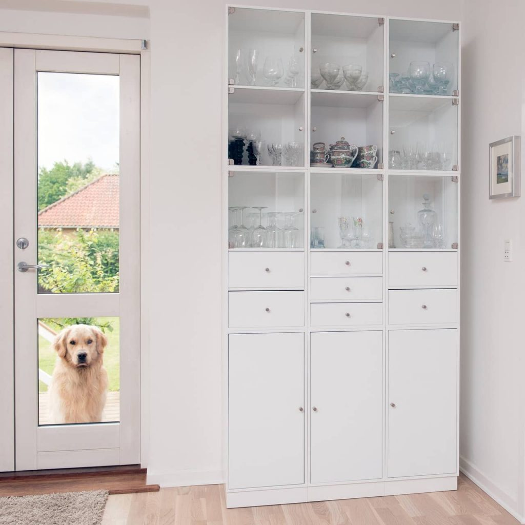 Pet dog standing at a door of pet friendly house