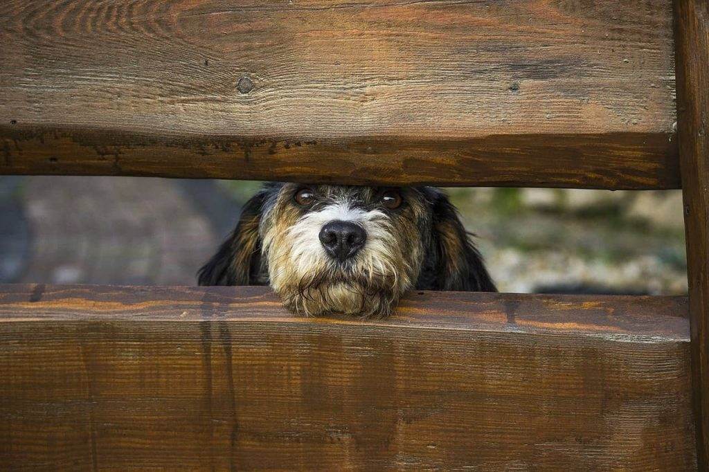 dog peaking from a fence window space