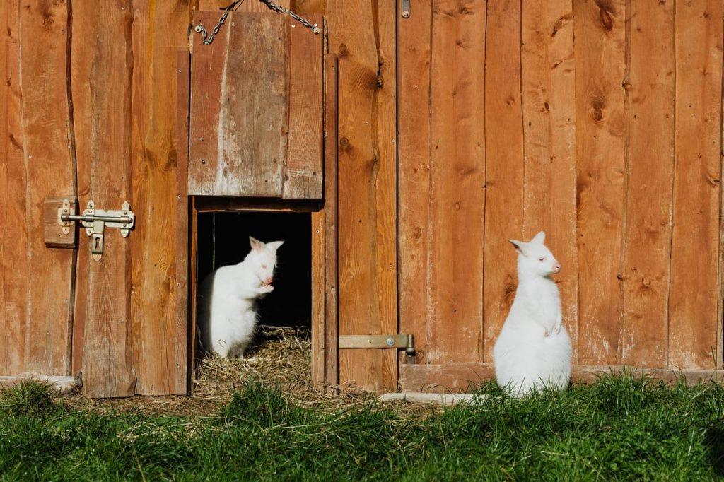 pet gate at pet friendly house