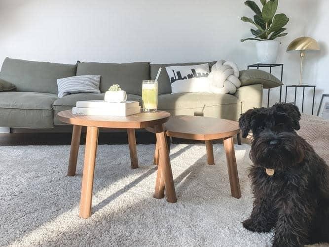 2 Very Easy DIY Carpet Fresheners