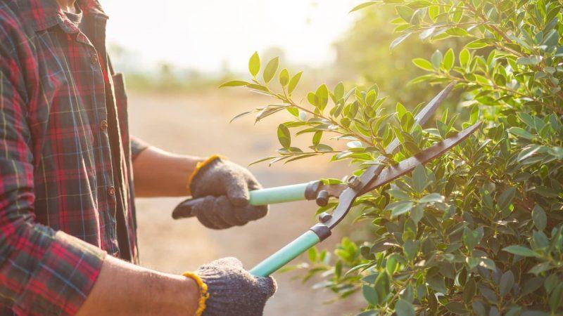 Tips For Beginner Gardeners: Understanding Invasive Vegetation
