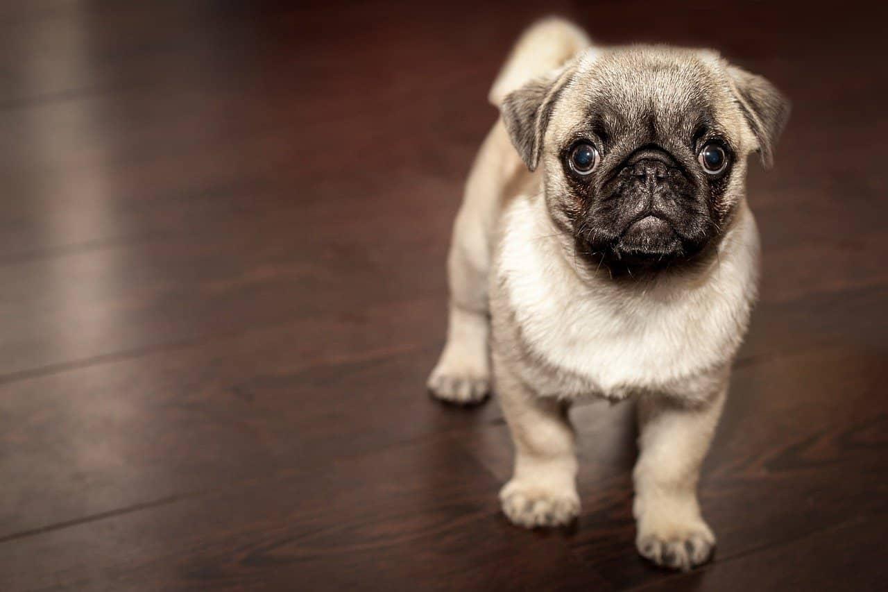Considerations When Choosing Pet-Friendly Flooring Options